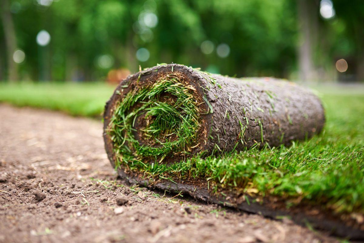 rolka z trawnikiem